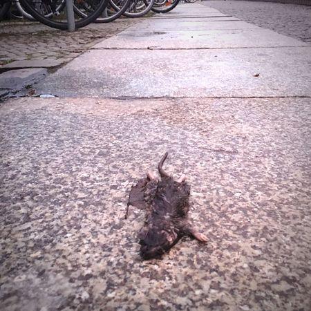Mitteltot Sad Winter Wet Ostkreuz Berlin Zentralperspektive No People Street Dead Mouse Mouse Dead Animal Animal