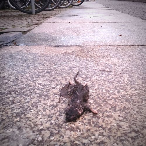 Mitteltot Sad Winter Wet Ostkreuz Berlin Zentralperspektive No People Street Dead Mouse Mouse Dead Animal Animal