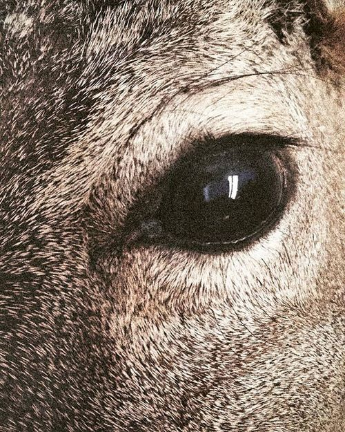 are you happy ? that you've seen what i see. Photography Deer Roedeer Happynewyear 2016 Dark Art Taxidermy Animal Nature