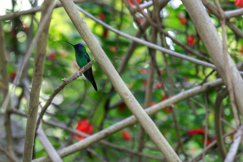 Colibris Nature Colors Tijuca's Forest Animals Perfection Beautiful Nature Bird Photography Lucky