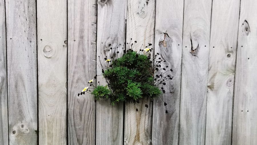 Full frame shot of plants growing on wooden fence
