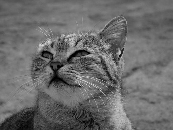 Cat Cat Lovers Animals