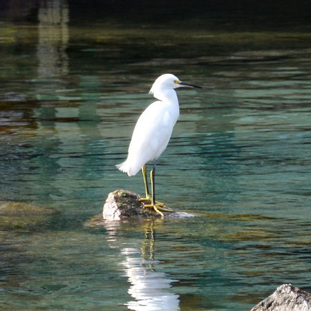 Animal Themes Beauty In Nature Bird Photography Birdwatching Egret Egretta Lake Neture No People Peace And Quiet River
