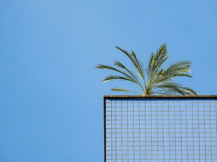 Rooftop Palms Blue Sky