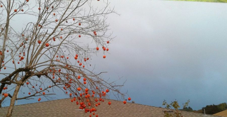 Backgrounds Bare Tree Branch Change Clouds Clouds And Sky Dark Sky Day Full Frame Low Angle View Moody Sky Nature No People Orange Outdoors Persimmon Persimmontree Tree Twig