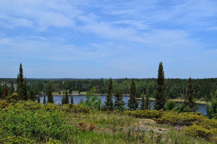 Scenic view of river and trees against cloudy blue sky on sunny day