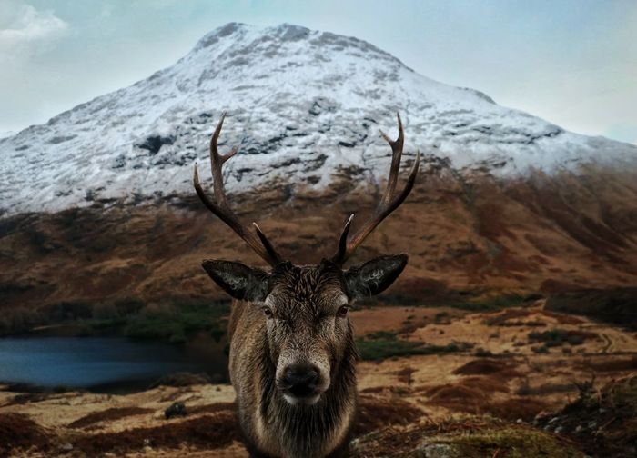 Portrait of deer standing against mountain
