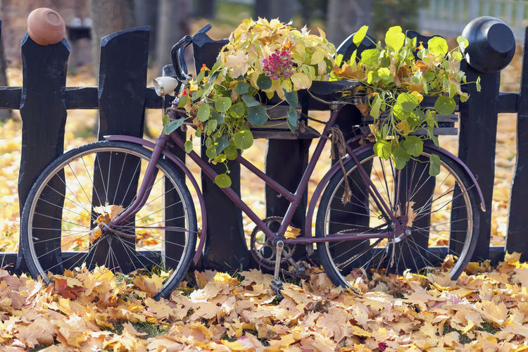 Old bike parked near the old wooden fence, fresh flowers among fallen autumn leaves, Atmospheric landscape, landscape, relax, nostalgia concept Transportation Bicycle Land Vehicle Leaf Nature Flower Day No People Autumn Outdoors Close-up Leaves Fall Fallen Bike Fense Wooden Atmospheric Mood Relax Nostalgia Nature Vintage Leisure Scenic Decor