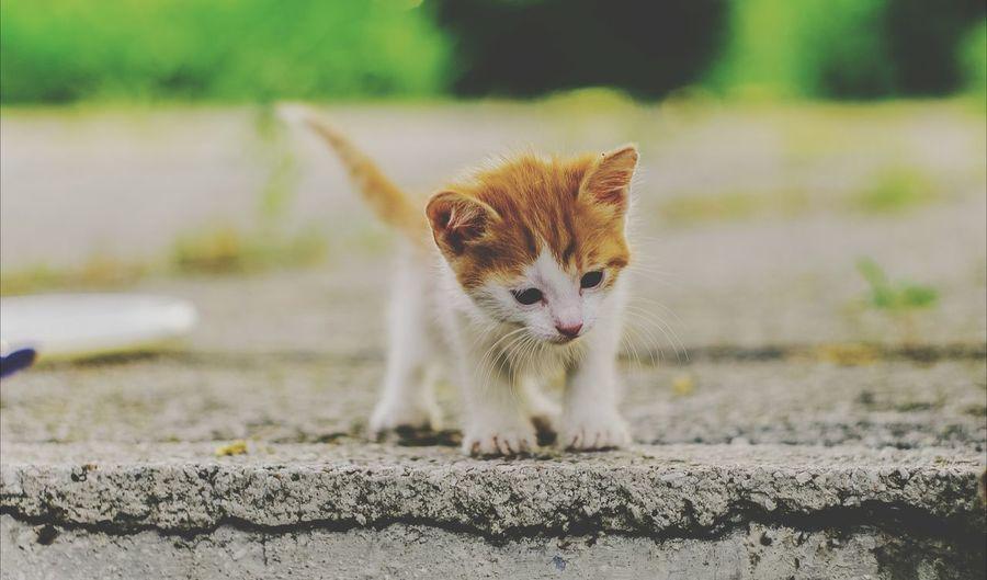 Cute Curious Kitten