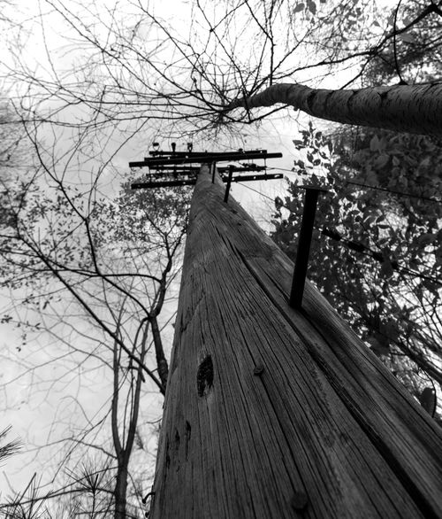 """Telephone Pole"" Photographed by AJTinker AjTinkerPhotography Tree Bare Tree Wood - Material Branch No People Outdoors Nature Low Angle View Built Structure Architecture Building Exterior Sky Beauty In Nature EyeEm Best Shots EyeEmSelect EyeEm Gallery Black And White Black & White Blackandwhite Photography Blackandwhite Telephone Pole Ruins Abandoned"