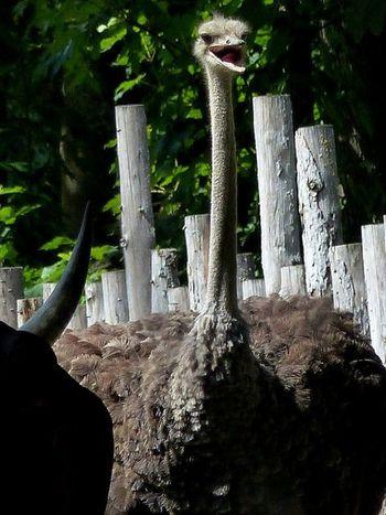 Tiere Straubing Tiergarten Straubing Heikobo
