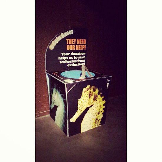 عجبتني فكرة صندوق التبرع ..تحط العمله المعدنية coins في الحديد ..وتنزل العملة بسرعه وتسوي حركة دائرية الى ان تصل بالاسفل .. Donate Creative_idea Aquarium