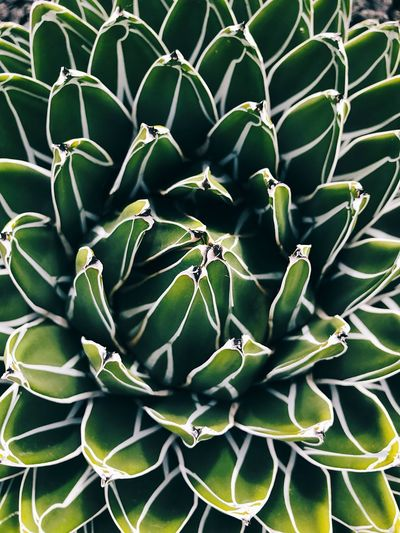 Succulents Green Color Growth Full Frame Cactus No People Plant Day Nature Close-up Freshness Leaf Outdoors Beauty In Nature