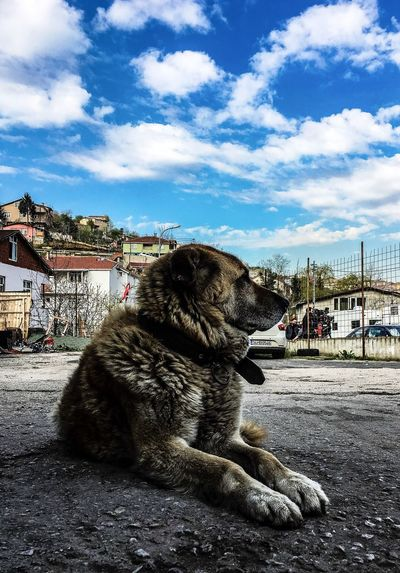 Sky Pets Animal Themes Building Exterior Built Structure Domestic Animals Architecture One Animal Dog Mammal Outdoors Cloud - Sky No People Day Nature