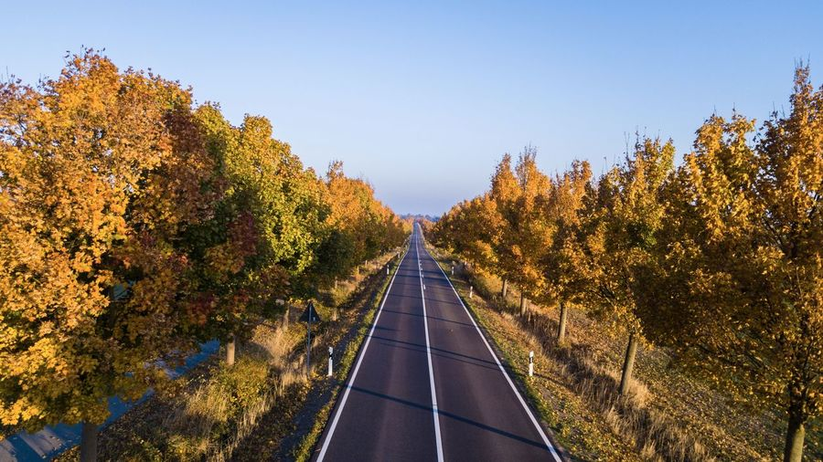 Scenic view of trees against clear sky during autumn