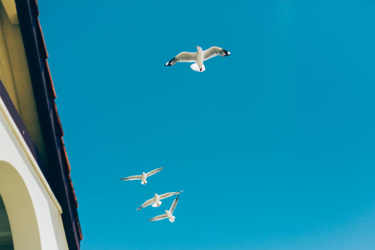 Flying Vertebrate Mid-air Animal Themes Animal Sky Animals In The Wild Animal Wildlife Bird Blue Spread Wings Low Angle View Mode Of Transportation Transportation Day Clear Sky Nature Motion Airplane Air Vehicle No People Seagull Flight Plane Turquoise Colored Outdoor
