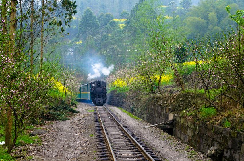 The train to the spring.The staem train is used for transportation at ordinary time,but when the yellow flowers bloom,the steam train is used for travel. China Leshan Nature No People Outdoors Sichuan Spring Steam Steam Train Tourism Train Train Station Transportation Travel Yellow Yellow Flowers On The Way 43 Golden Moments