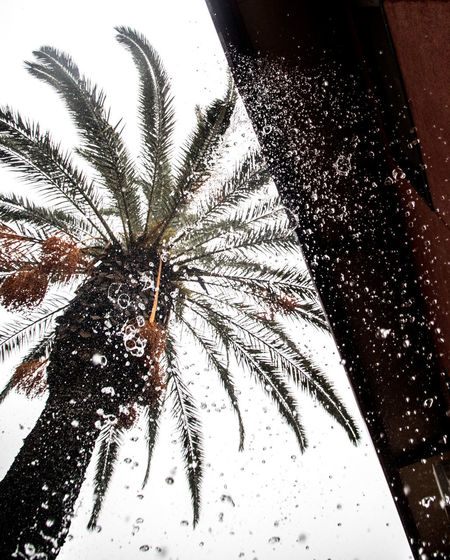Low angle view of palm tree during winter