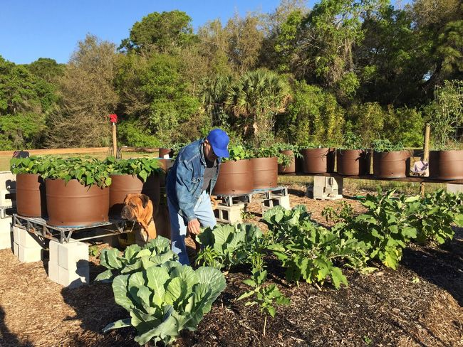 Community garden Garden Garden Photography Vegetable Garden Gardening Community Garden Melbourne Village