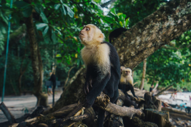 Close-up of monkey sitting on tree