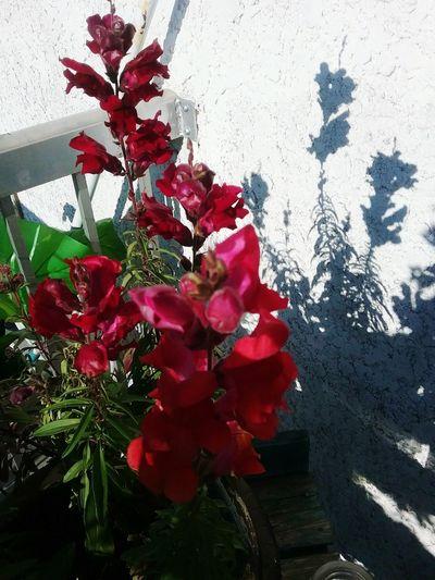 Beauty In Nature Fragility Flower Red Velvet Paintings