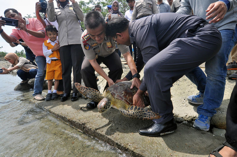 Indonesian release Sea Turtle_ Cat Crouching Day Domestic Domestic Animals Feline Group Of People Holding Mammal Men Nature One Animal Outdoors People Pets Real People Responsibility Vertebrate