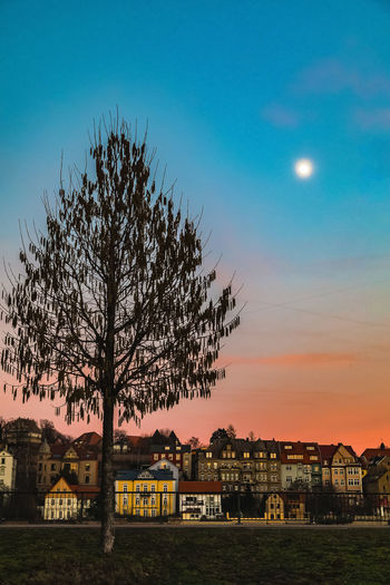 Tree by buildings against sky at sunset