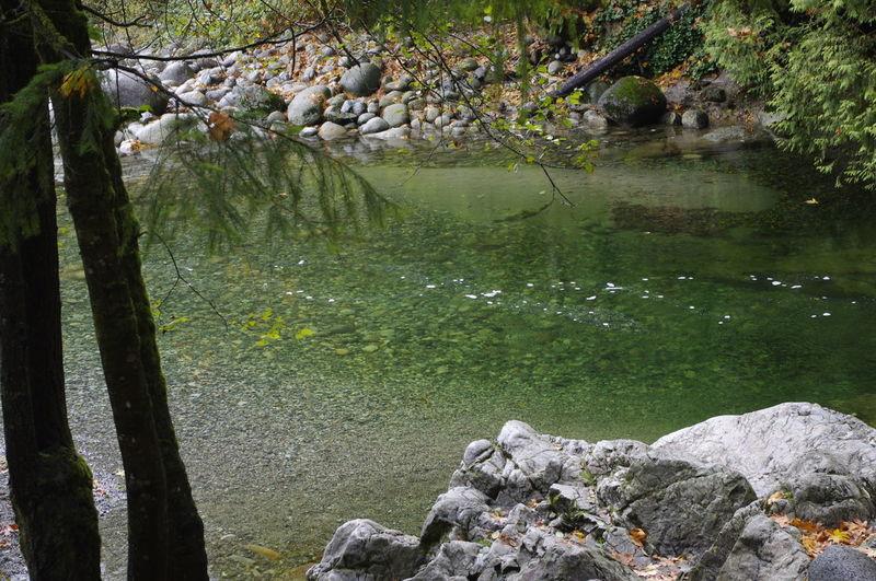Creek Beauty In