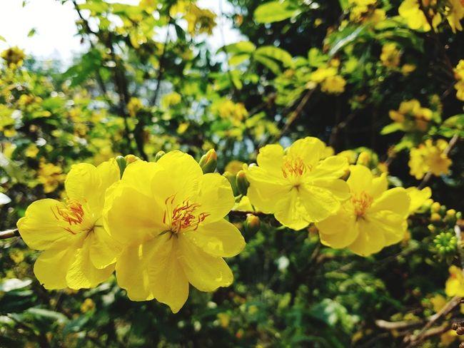 Springtime Spring Flowers Printemps Fleur Jaune Fleurs Fleurs Du Jardin Flower Bright Delicate Petal Yellow Outdoors Growth Nature Day Close-up
