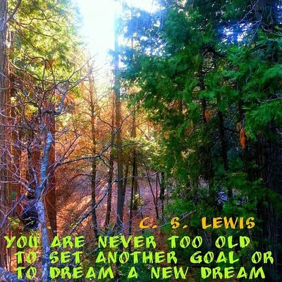Tree adventures of the day Cslewis