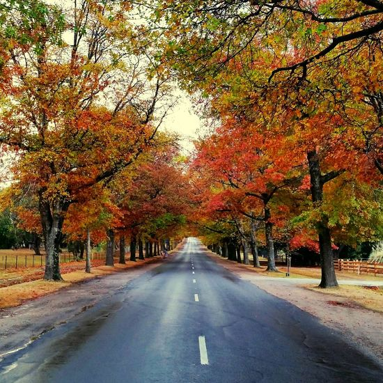 Sunday drives Visitvictoria Macedon Tree Road Autumn Leaf Change Dividing Line Diminishing Perspective Sky