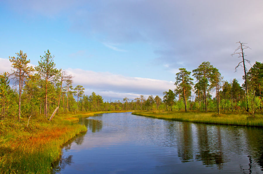 The old river of August sunny day in Western Siberia West Siberian Plain Beauty In Nature Cloud - Sky Day Forest Green Color Kogalym Lake Landscape Nature No People Outdoors Reflection Scenics Sky Taiga Tranquil Scene Tranquility Tree Water