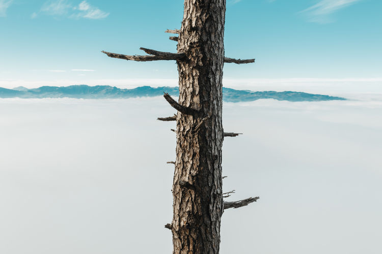 Dead tree on wooden post against sky