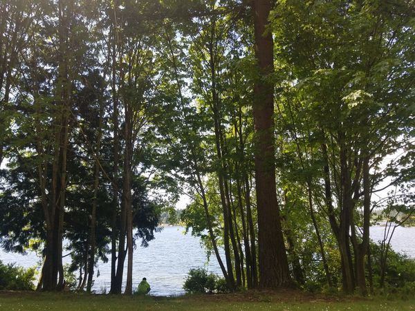 Tree Nature Outdoors Beauty In Nature Day Forest Growth Green Color Tranquil Scene Tranquility Water No People Branch Lake Low Angle View Scenics Landscape Rural Scene Sky