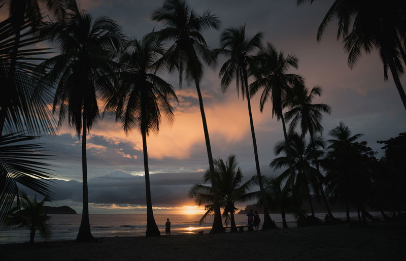 Costa Rica Beach Beauty In Nature Horizon Over Water Nature Outdoors Palm Tree Scenics Sea Silhouette Sunset Tranquil Scene Tranquility Tree
