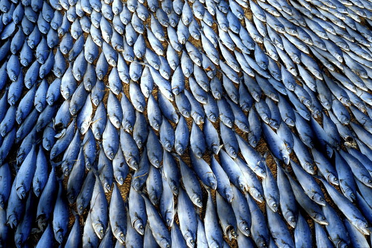 Backgrounds Beautifully Organized Close-up Day Drying Fish Drying Fishes Fish Fishes Full Frame Goa India Large Group Of Animals Nature No People Outdoors Sea Life