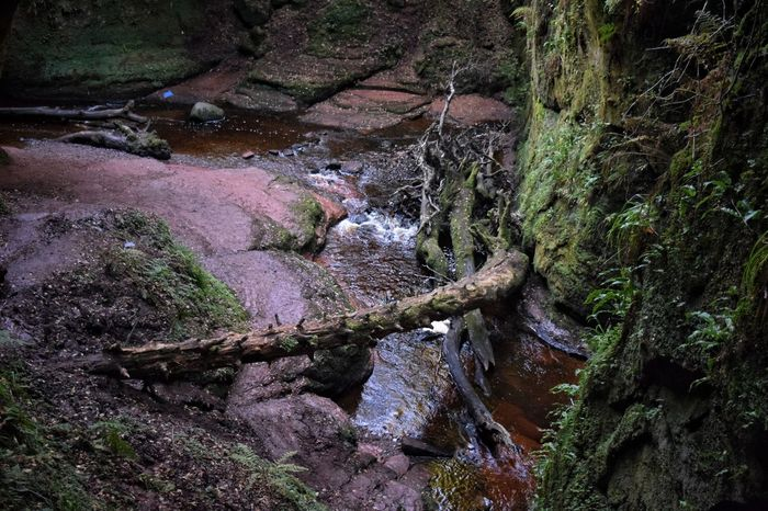 Looking down onto the devil's pulpit Cold Temperature Forest Rock - Object Nature Stream Non-urban Scene Scenics Tranquility Moss Plant Tranquil Scene Growth Tree Trunk Water Beauty In Nature Green Color Scotland Remote Solitude Devil's Pulpit
