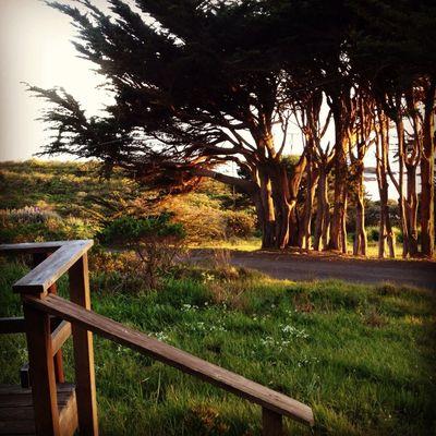 TreePorn Nature_collection Marin County CA Bolinas California