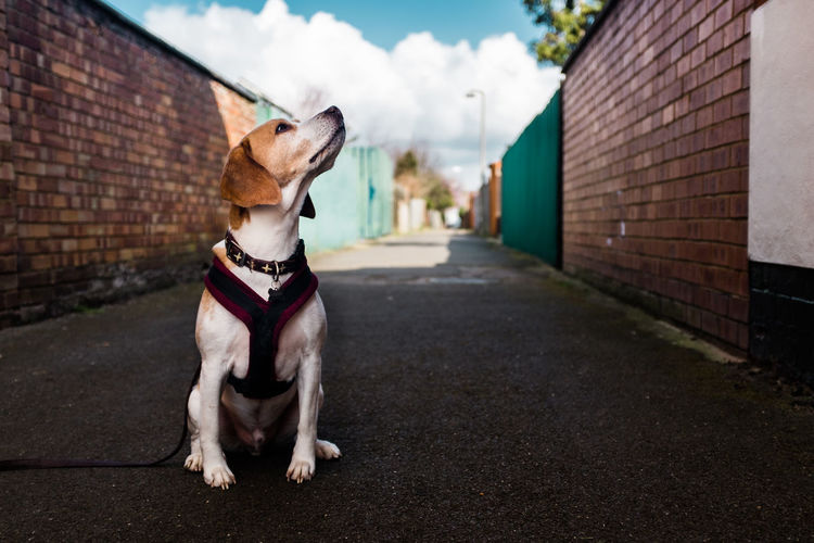 View Of Dog Sitting On Street