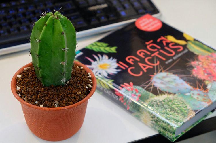 ตอริทเทอโร 🌵 Myrtillocactus Books Cactus Cactusclub Cactuslover Cactusporn Close-up Green Green Color Myrtillocactus Nature Plant Selective Focus