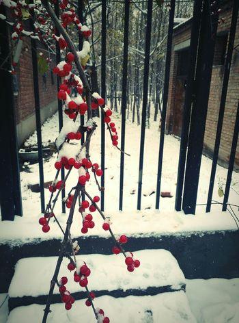Snow First Eyeem Photo Snow
