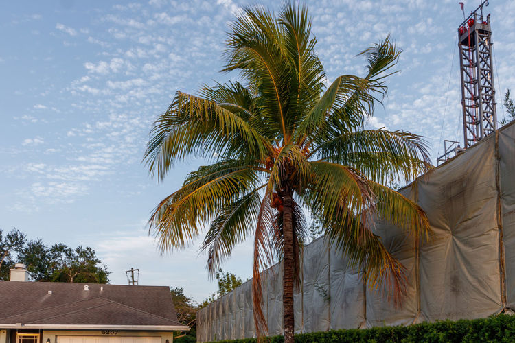 Low angle view of palm trees and building against sky