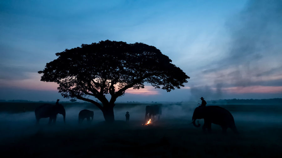 People riding elephants on land during sunset