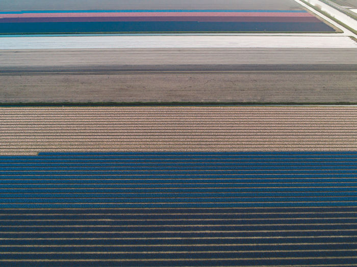 Springtime Decadence Hyacinth Flowers Field Agriculture Pattern No People Wood - Material Day High Angle View Outdoors Backgrounds Close-up Striped Blue Transportation Full Frame Brown Metal Textile Architecture Corrugated Iron In A Row Textured  Parallel