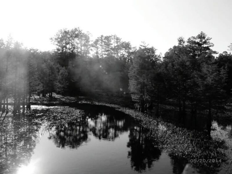 Shades Of Grey Creative Light And Shadow Black And White Collection  Water Reflections Tree_collection  Misty