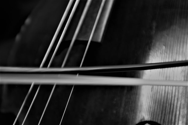 Black & White Jazz Jazz Concert JazzMusic Music Arts Culture And Entertainment Bassist Black And White Collection  Black And White Photography Classical Music Close-up Day Fretboard Hungarian Jazz Indoors  Jazz Music Motion Music Musical Instrument Musical Instrument String Musician Musicians No People Portrait String Instrument