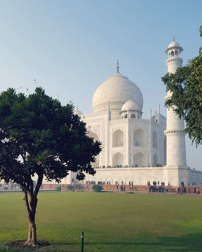 Taj Beauty Architecture Dome Tomb Travel Destination Seven Wonders Of The World Shahjahan Mumtaz Love History Sideview Colors Green Color Blue Taj Mahal Tree White Peace Outdoors Sky