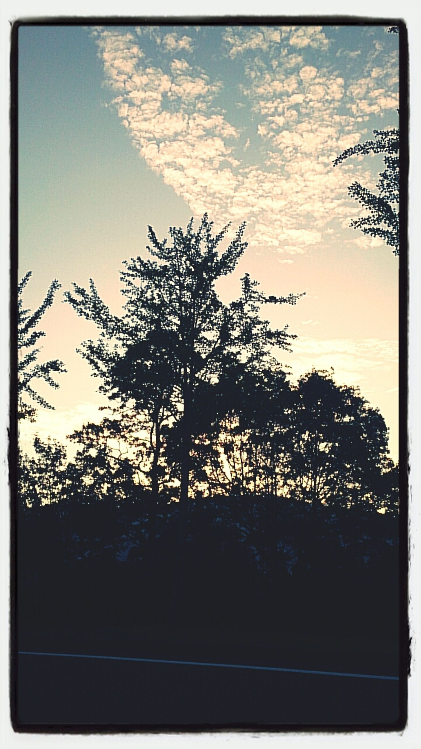 transfer print, silhouette, tree, auto post production filter, sky, sunset, tranquility, beauty in nature, scenics, nature, tranquil scene, low angle view, cloud - sky, cloud, growth, bare tree, branch, dusk, outdoors, no people