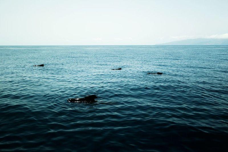 Tenerife, Islas Canarias Been There. Travel Destinations Dolphins Dolphin Sea Ocean Sky Day Outdoors Photograph Sea Life Animals Samsung Samsung Nx2000 EyEmNewHere EyeEm Ready   AI Now EyeEmNewHere #urbanana: The Urban Playground #urbanana: The Urban Playground #urbanana: The Urban Playground