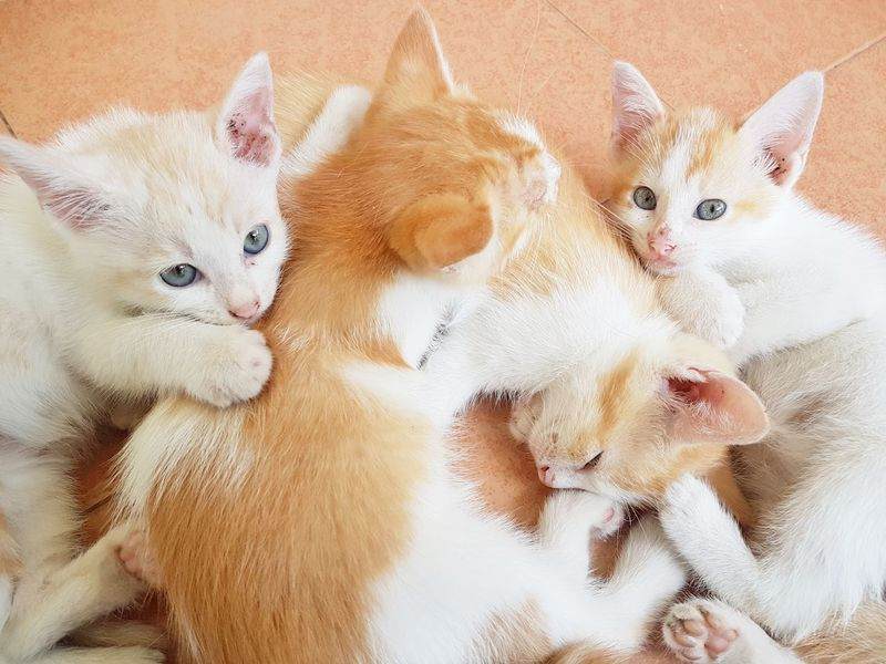 Siblings Family Family Cat Cat Cats Kitten Kittens Cute Pets Cute Cats Adorable Cat  Sleeping Cat Brown Color Resting Hugging Cuddle Pets Portrait Togetherness Domestic Cat Looking At Camera Cute High Angle View Young Animal Close-up Ginger Cat Pet Bed At Home Domestic Animals Whisker Sleeping